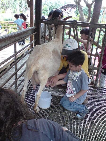 我愛喝羊奶但是我怕怕ㄟ
