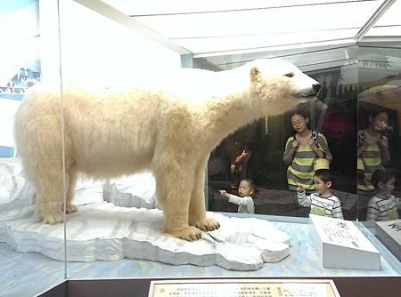 北極熊標本