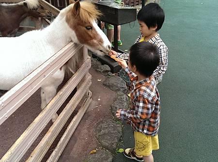 九州自然動物公園-迷你馬