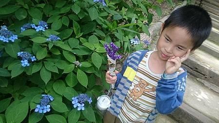 布引香草園處處漂亮植物