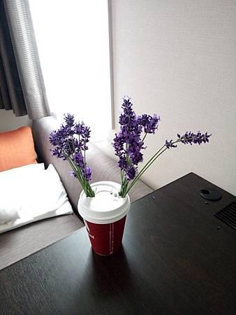 摘回來的薰衣草放在旅館