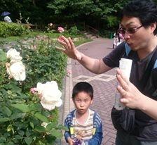 布引香草園玫瑰盛放