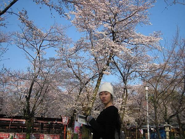 IMG_4786 到處有櫻花.JPG
