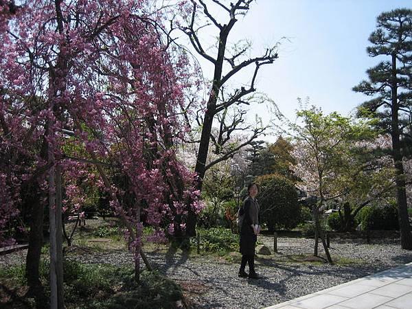 IMG_5119 三十三間堂前面小庭園.JPG