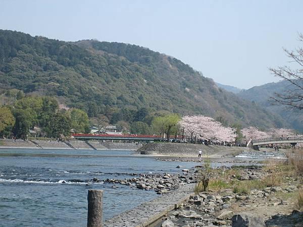 IMG_4997 宇治川,兩旁滿滿的櫻花.JPG