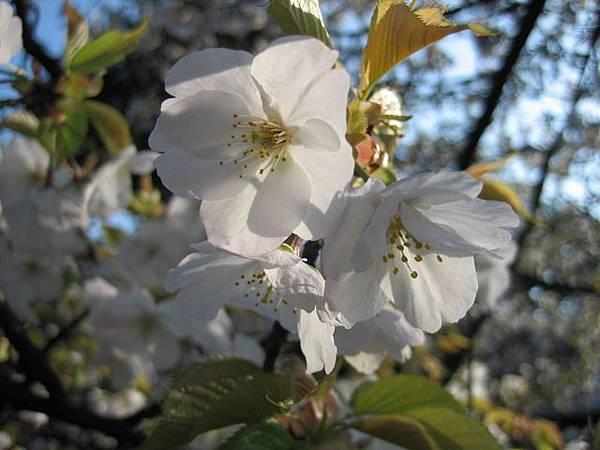 IMG_4810 大大的花.JPG