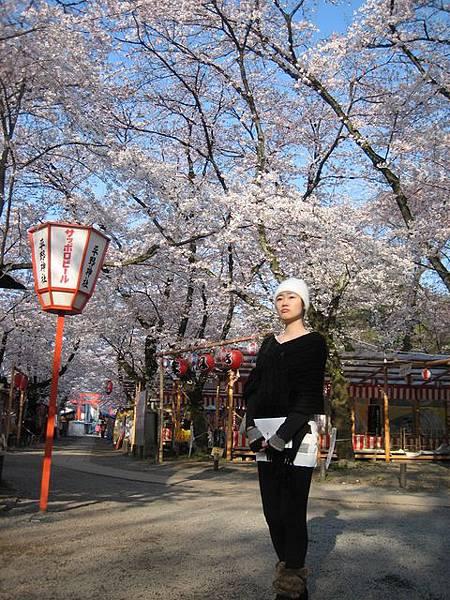IMG_4784 據說櫻花還沒滿開呢.JPG