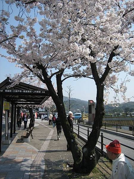 IMG_4993 車站前也有櫻花.JPG