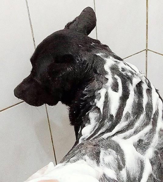 寵物洗毛精