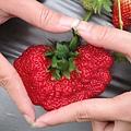 甜在心草莓
