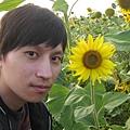 咕咕雞&向日葵