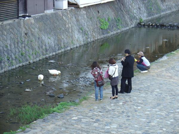 京都街頭--鴨川.JPG