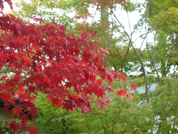 永觀堂-紅葉