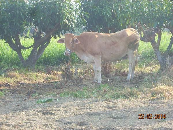 肥料製造機 (2)