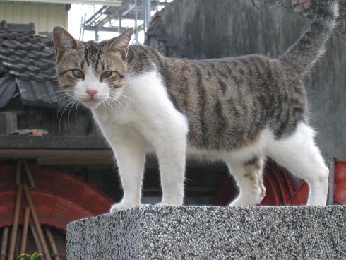 貓咪3.JPG