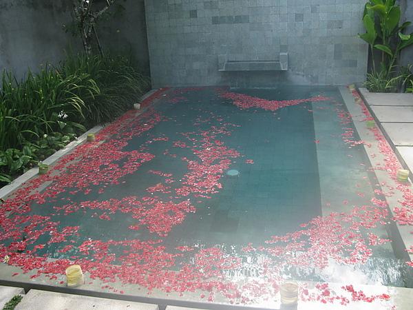 美美的水池