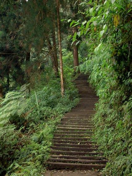 藤枝海棠步道
