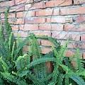 牆邊的植物真多樣
