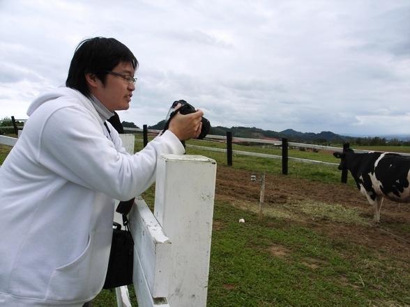 老弟在看牛