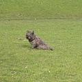 花園裡遇到的狗