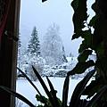 外面還飄著雪
