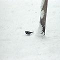 雪地裡還是有不少小動物喔