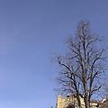 今天是一整片的藍天