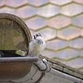 窗外的小鳥