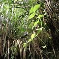 可愛的植物