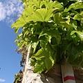 牆上的植物