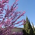 另一顆紫色的樹