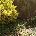 一旁的植物