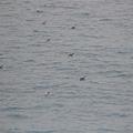 很多海鷗喔~