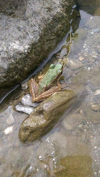 白鮑溪青蛙.jpg