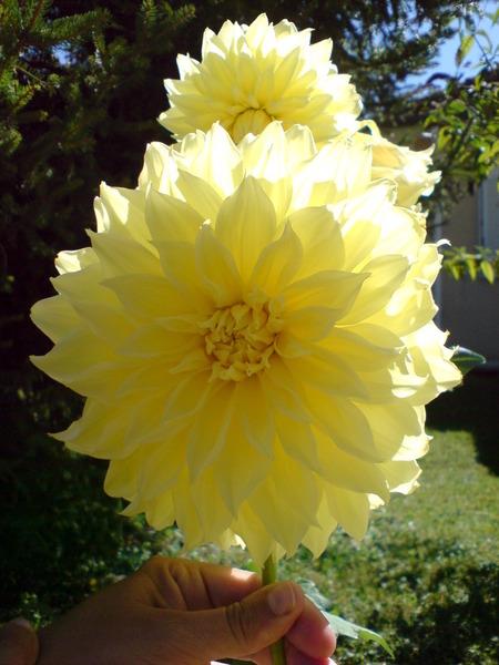 又是愛花婆婆家的花哦