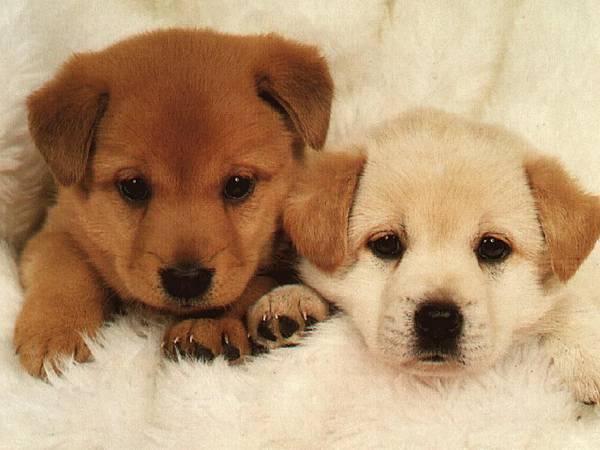 Dog-Puppys
