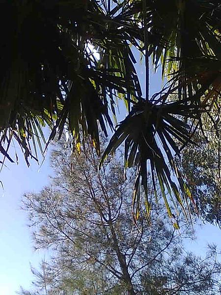 skydiving under the tree, Apr 26.jpg