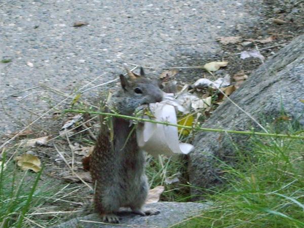 超可愛的松鼠