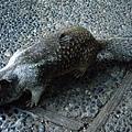 第一次那麼靠近松鼠