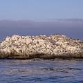 滿滿的海鳥