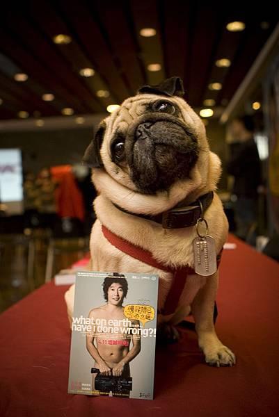 可愛的狗狗也幫忙宣傳