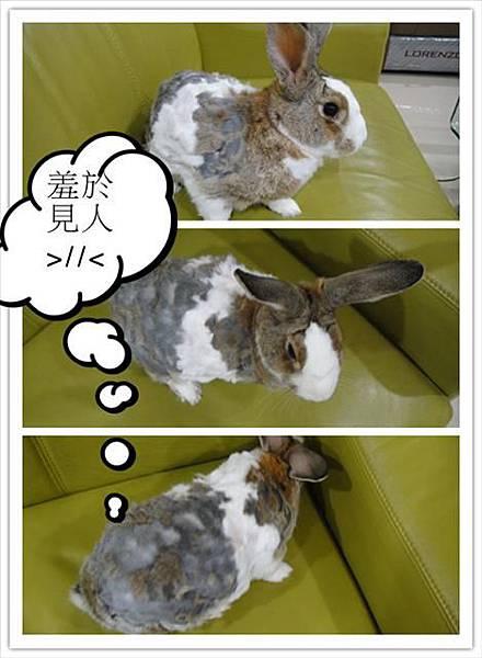2012/6/18天氣太熱剃成狗啃的