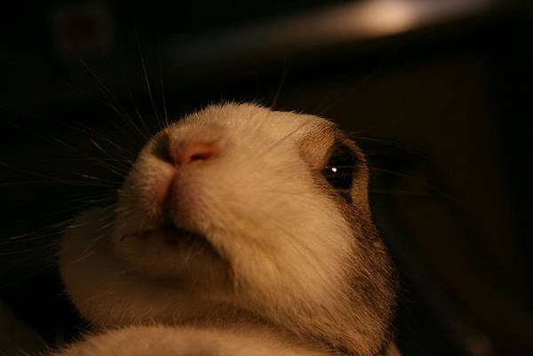 我是機靈兔!
