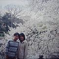 2001.spring 箱根賞櫻