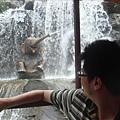 Jungle river cruise的噴水小象