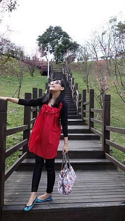 1/31 大年初一來南港公園走春,兩旁櫻花都快開了~