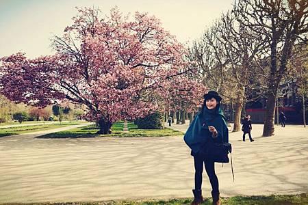 櫻花開滿滿