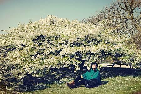 櫻花一百張