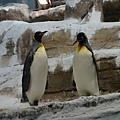 再去看企鵝