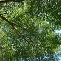 信義分局督導 組長教我認識了橄欖樹
